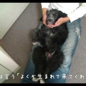 どうぶつ基金:保護犬ジオと海
