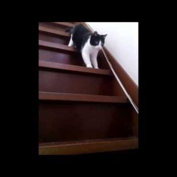 どうぶつ基金 階段を降りる