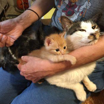 母猫を知らない子が血の繋がらない子猫を育てる
