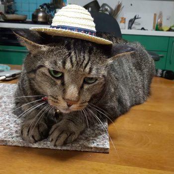 しょっぺー長男猫