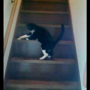 階段で遊ぶ2匹