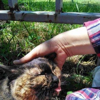 さくら猫 穏やかなさびちゃん