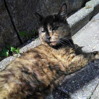 公園の地域猫 さびちゃん
